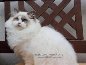 Sa Maman : Jollie Constantina Cats
