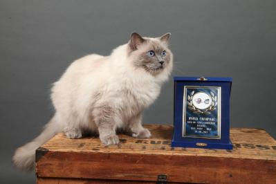 Champion du Monde WCF