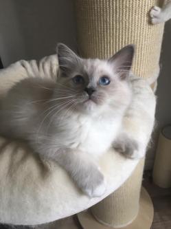 Princesse Pippa