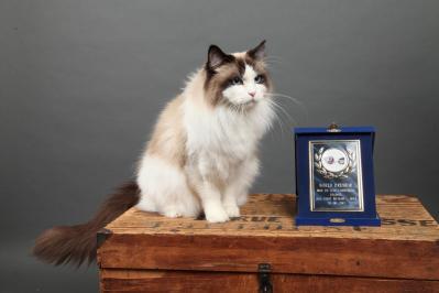 Iwok - Champion du Monde