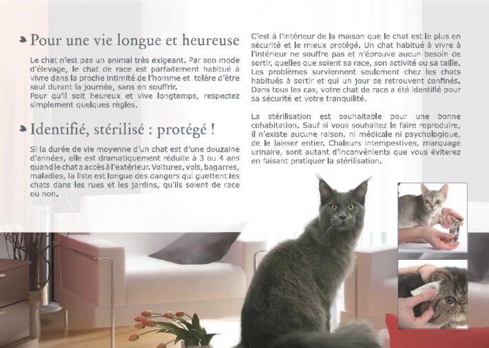 livret-chaton-4.png