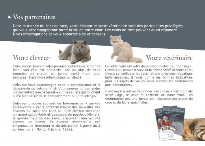 livret-chaton-6.png