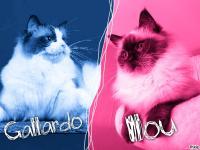 Ilou & Gallardo 2015